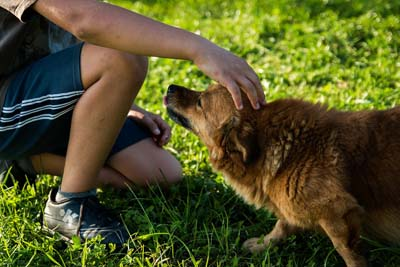image for It's National Dog Bite Prevention Week